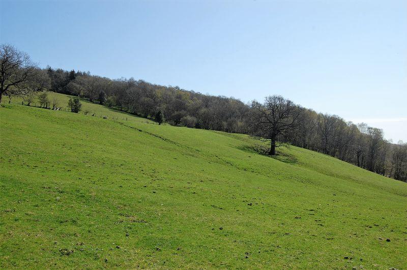 11.43 Acres of Pasture Land, Hendre Fields, Ynysybwl CF37 3LS