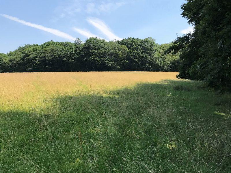 60.36 Acres of Agricultural Land, Part of Preswylfa Farm, Neath SA11 3QL