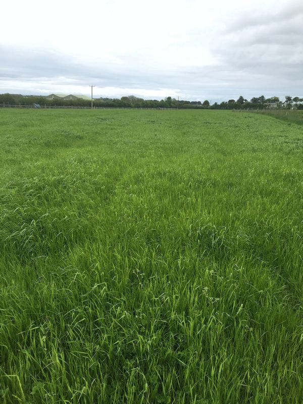 Property for sale in 7.085 Acres of Pasture Land part of Ty Newydd Farm, Flemingston