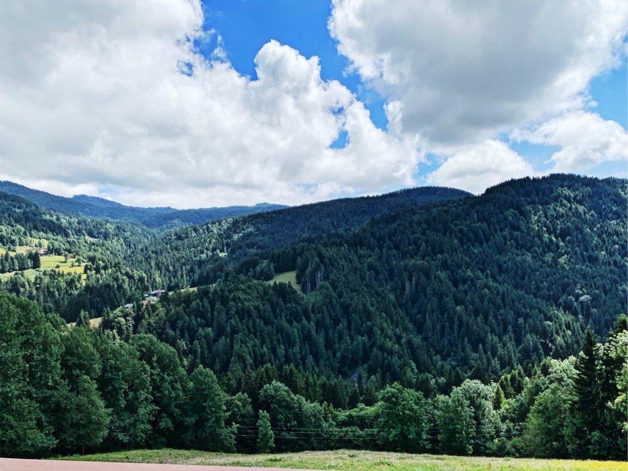 View to Sincerneret