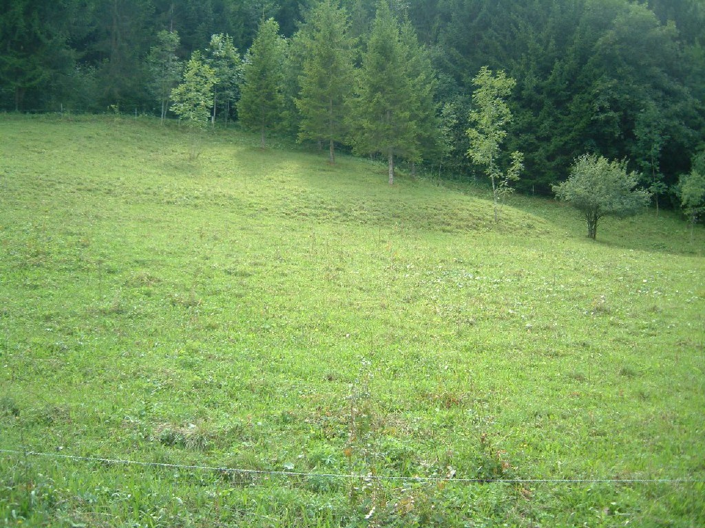 Rural Setting
