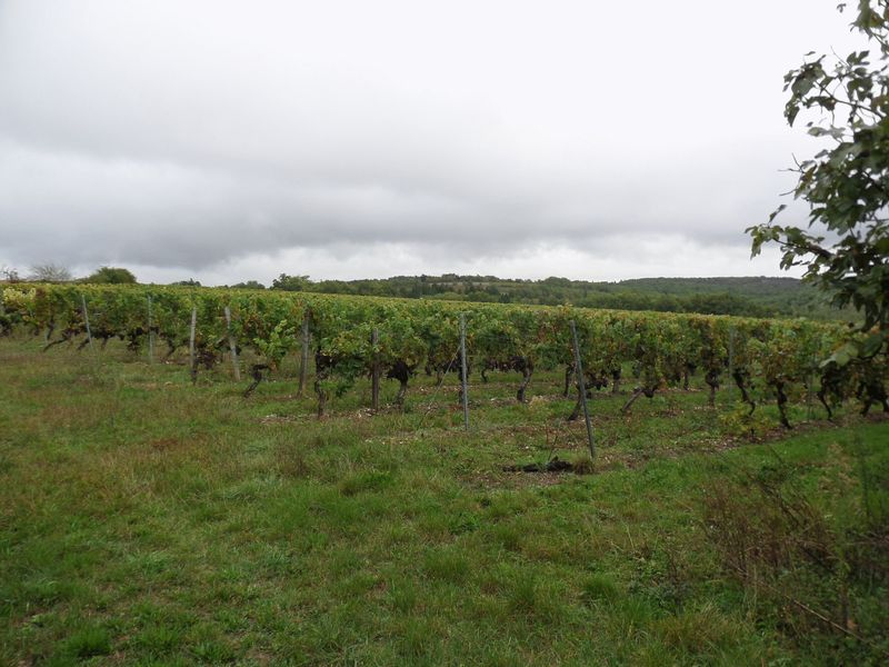 Wine-producing property with land