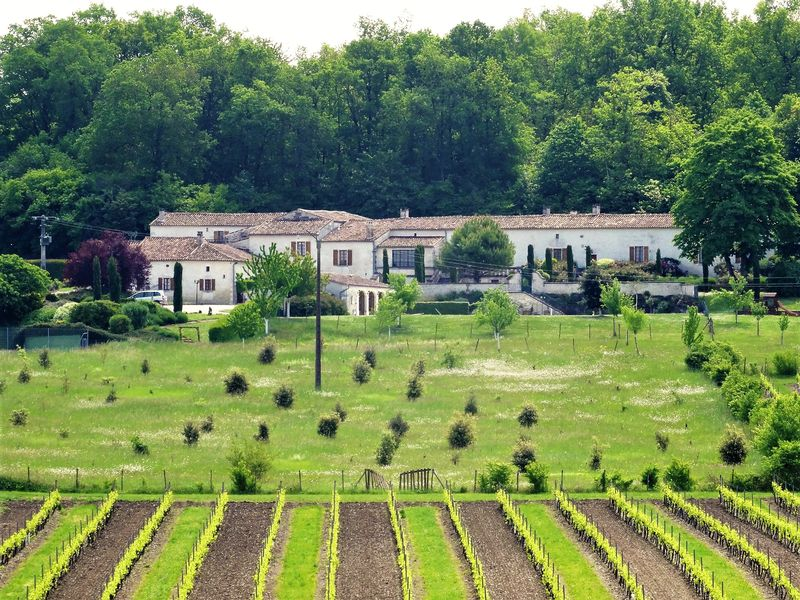 Exceptional domain in the heart of the Cognac region