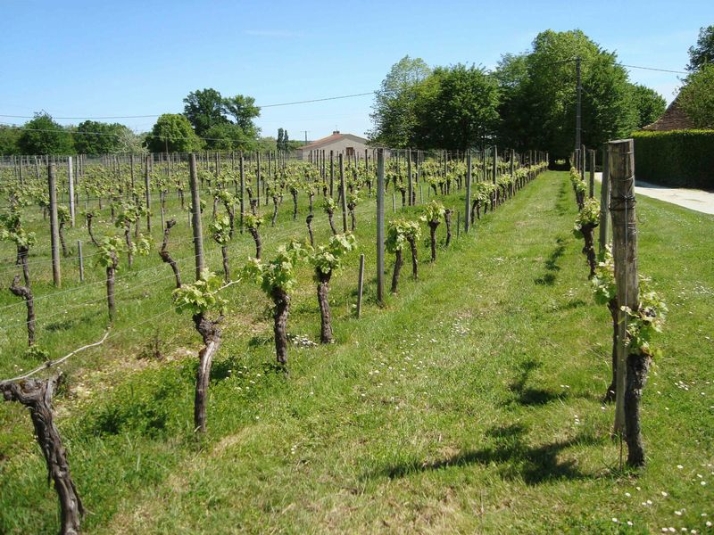 Boutique vineyard of 4 hectares, Peycharmant