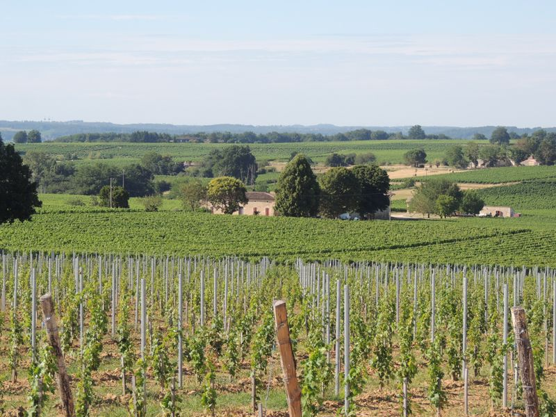 Well structured Bordeaux vineyard in Entre Deux Mers